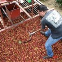 Кофейные регионы Коста-Рики