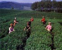 Региональные разновидности кофе в Эфиопии