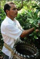 Влияние окружающей среды на производство кофе в Коста-Рике