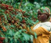 Регионы культивирования кофе в Бразилии